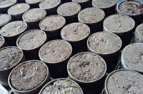 Soil examination week